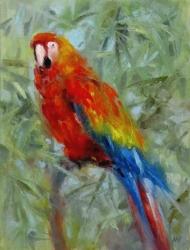 Papoušek 3 - 1051