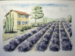 Provence - 1319