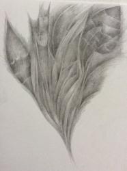 Fantazie rostlin