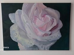 Rose - 1409