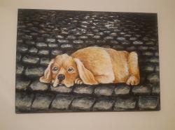 Ztracený pes - 1215