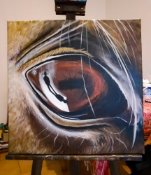Koňské oko