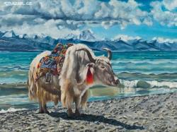 Tibetan Yak (Afrodita) - 1467