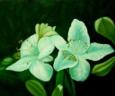 Bílý květ