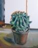 Kaktus - 536