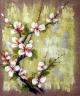 Květy broskvoní