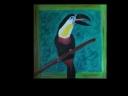 Tukan s černý zobakem