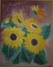 Slunečnice - prodejce: 957