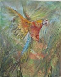 Papoušek - 1051