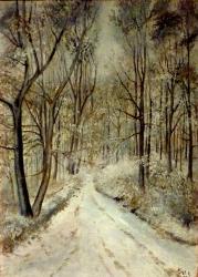 Ranní lesní ticho - 1173