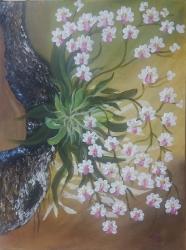 Orchideje - prodejce: 1200