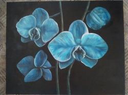 Modre orchideje