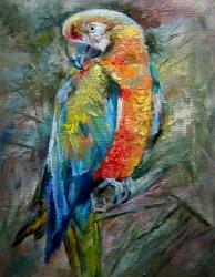 Papoušek 2 - 1051