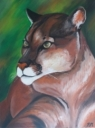 Puma - 1218
