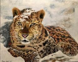 Panthera Pardus - 1087