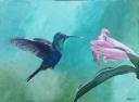 Hummingbird - 1231