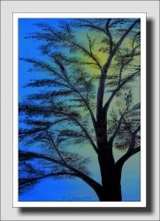 Pocit stínu stromu  - 1263