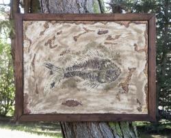 Zkamenělá ryba - 1191