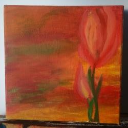 Tulipán - 1293
